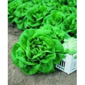 Salata (4)