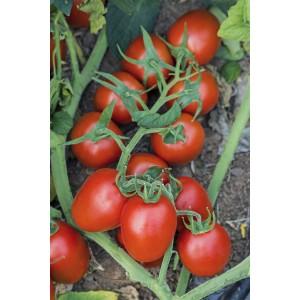 Seminte de tomate determinate Fenomena F1, 1000 seminte