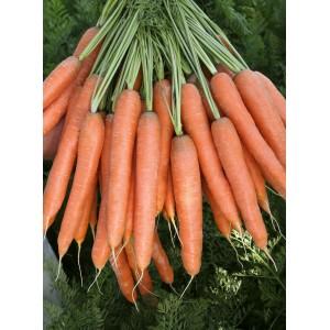Seminte de morcov Presto F1, calibru 2,2 - 2,4, 25000 seminte