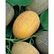 Fructe (9)