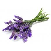 Plante medicinale (8)