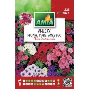 Seminte de flori phlox grand fleur amestec, 0,5 grame