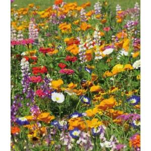 Seminte amestec de flori