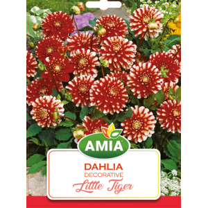 Bulbi Dahlia Little Tiger, cal I, 1 bucata