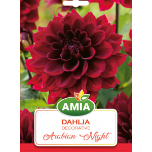 Bulbi Dahlia Arabian Night, cal I, 1 bucata