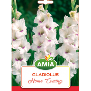 Bulbi Gladiole Home Coming, calibru 12/14, 7 bucati, AMIA