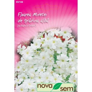 Seminte de flori floarea miresei de gradina alba, 1 gram