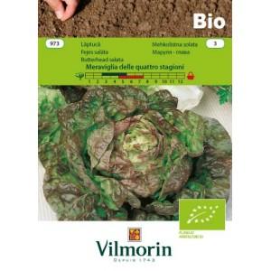 Seminte bio de salata meraviglia delle quatro stagioni, 1 gram, vilmorin